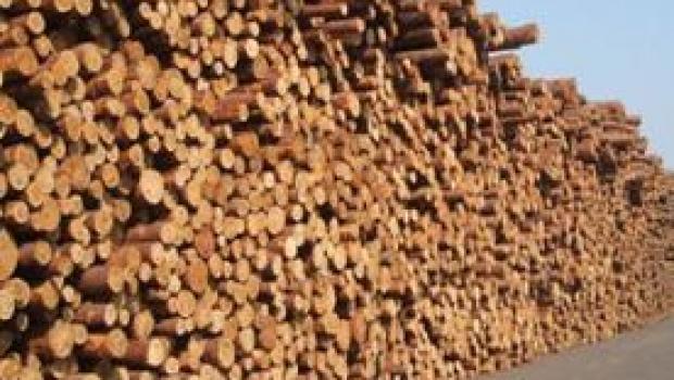 Kualitas Lumber Gergaji